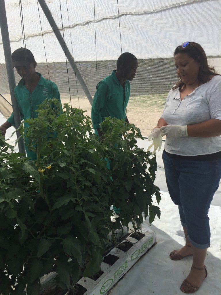 Students in the greenhouses tending plants, lots of good time spent in here.